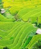 Giáo trình Hệ thống canh tác: Phần 1 - PGS.TS. Nguyễn Bảo Vệ, TS. Nguyễn Thị Xuân Thu