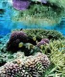 Ebook Cơ sở hải dương học: Phần 1 - Phạm Văn Huân