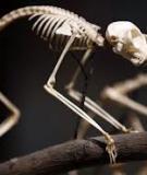 Động vật học -  Động vật có xương sống: phần 1