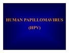 Bài giảng Human papillomavirus (HPV)
