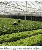 Hướng dẫn sản xuất rau hữu cơ