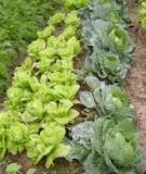 Kế hoạch đào tạo và những nội dung cần lưu ý trong lớp HLND về nông nghiệp hữu cơ (OA-FFS)
