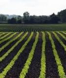 Nông nghiệp hữu cơ với sử dụng đất hiệu quả và bền vững - PGS.TS. Đào Châu Thu