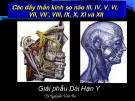 Bài giảng Các dây thần kinh sọ não III, IV, V, VI, VII, VII', VIII, IX, X, XI và XII - TS. Nguyễn Văn Ba