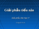 Bài giảng Giải phẫu tiểu não - TS. Nguyễn Văn Ba