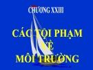 Bài giảng Luật Hình sự Việt Nam: Chương 23 - ThS. Trần Đức Thìn