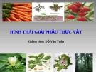 Bài giảng Hình thái giải phẫu thực vật - GV. Đỗ Văn Tuân