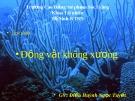 Bài giảng Động vật không xương: Ngành sứa lược - GV. Điền Huỳnh Ngọc Tuyết