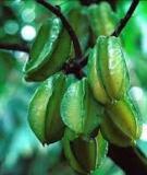 Bón phân cho cây ăn quả - Nguyễn Bảo Vệ