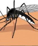 Bài giảng Bệnh sốt xuất huyết Dengue (SXH-D) trẻ em