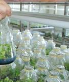 Tiểu luận: Ứng dụng công nghệ sinh học