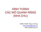 Bài giảng Hình thành các mô quanh răng (nha chu) - NGND.GS BS. Hoàng Tử Hùng