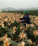Giáo trình Kỹ thuật nông nghiệp: Phần 2 - ĐH kinh tế Quốc Dân