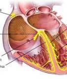 Holter điện tim: Kỹ thuật và giá trị chẩn đoán bệnh tim - TS. Nguyễn Tá Đông