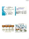 Bài giảng Các mạng truyền thông vô tuyến - GV.TS. Nguyễn Việt Hùng