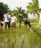 Khóa luận tốt nghiệp Văn hóa du lịch: Phát triển loại hình du lịch homestay tại xã Việt Hải – Cát Bà