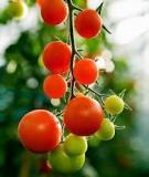 Bí quyết làm đẹp từ các loại quả màu đỏ