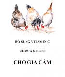 Vitamin C và cách bổ sung chống stress cho gia cầm: Phần 1