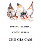 Vitamin C và cách bổ sung chống stress cho gia cầm: Phần 2