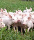 Tài liệu chăn nuôi - Chương 4 Chăn nuôi lợn