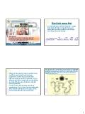 Bài giảng Sinh sản vật nuôi: Quá trình mang thai - Phan Vũ Hải
