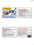 Bài giảng Sinh sản vật nuôi: Thụ tinh nhân tạo cho gia súc - Phan Vũ Hải