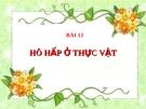 Bài giảng Sinh học 11 bài 12: Hô hấp ở thực vật
