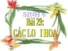 Bài giảng Sinh học 6 bài 29: Các loại hoa