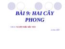 Slide bài Hai cây phong - Ngữ văn 8 - GV.Nguyễn N.Minh