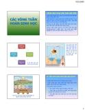 Bài giảng Các vòng tuần hoàn sinh học