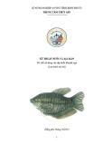 Kỹ thuật Nuôi cá Sặc rằn - sở Nông nghiệp & PTNT tỉnh Bình Phước