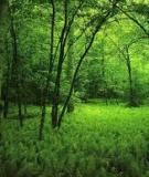 Cẩm nang hỏi đáp về Chính sách Chi trả dịch vụ môi trường rừng - Phòng Nghiệp vụ Qũy Bảo vệ và phát triển rừng tỉnh Bình Phước