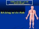 Bài giảng Giải phẫu: Ba động mạch cảnh - ĐH y Hà Nội