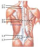 Bài giảng Đại cương về giải phẫu và sinh lý