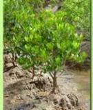 Danh mục thành phần loài thực vật nhập mặn ở cửa sông