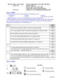 Đề thi học sinh giỏi cấp tỉnh môn Sinh học 12 năm 2013 (09/11/2013 - Đề dự bị kèm đáp án) - Sở GD & ĐT Long An