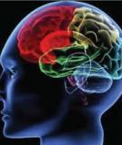 Đề cương chi tiết môn Sinh lý học hoạt động thần kinh cấp cao - GV Nguyễn Thị Minh Hằng