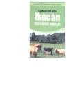 Công nghệ chế biến thức ăn cho gia súc nhai lại