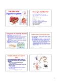 Bài giảng Sinh học động vật: Chương 7 - Nguyễn Hữu Trí