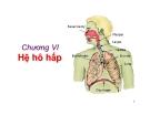 Bài giảng Sinh học động vật - Chương 6: Hệ hô hấp