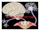 Bài giảng Sinh học động vật - Chương 2.1: Hệ thần kinh