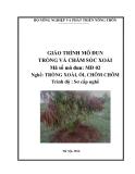 Giáo trình Trồng và chăm sóc xoài - MĐ02: Trồng xoài, ổi, chôm chôm