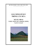 Giáo trình Trồng cây dứa - MĐ03: Trồng dứa (khóm, thơm)
