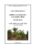 Giáo trình Trồng và chăm sóc cây quất cảnh - MĐ03: Trồng đào, quất cảnh