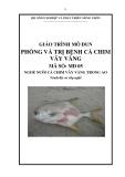 Giáo trình Phòng và trị bệnh cá chim vây vàng - MĐ05: Nuôi cá chim vây vàng trong ao
