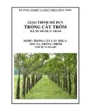 Giáo trình Trồng cây Trôm - MĐ04: Trồng cây lấy nhựa Sơn ta, Thông, Trôm