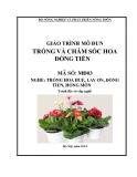 Giáo trình Trồng và chăm sóc hoa đồng tiền - MĐ03: Trồng hoa huệ, lay ơn, đồng tiền, hồng môn
