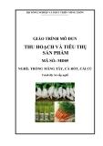 Giáo trình Thu hoạch và tiêu thụ sản phẩm - MĐ05: Trồng măng tây, cà rốt, cải củ