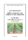 Giáo trình Trồng, chăm sóc, thu hoạch và tiêu thụ hành - MĐ03: Trồng cây làm gia vị