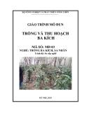 Giáo trình Trồng và thu hoạch ba kích - MĐ03: Trồng ba kích, sa nhân